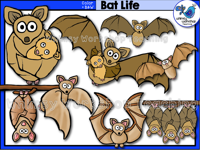 Life Cycle - Bat