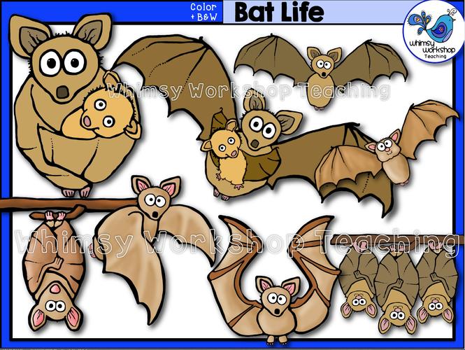 Life Cycle - Bat