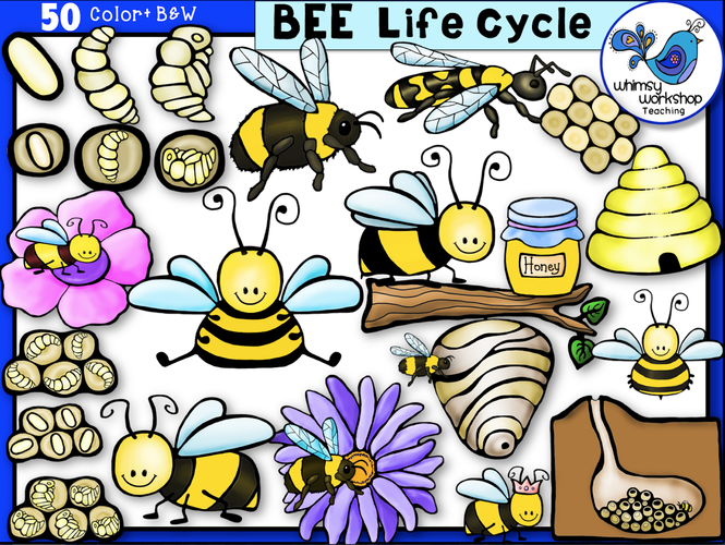 Life Cycle - Bee