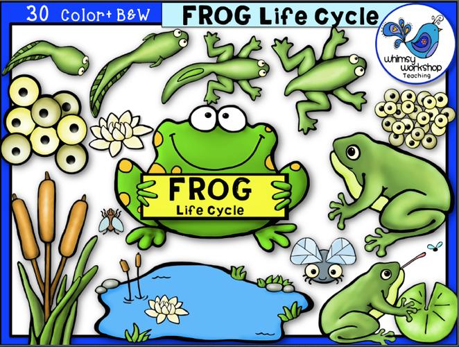 Life Cycle - Frog