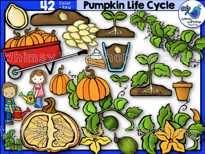 Life Cycle - Pumpkin