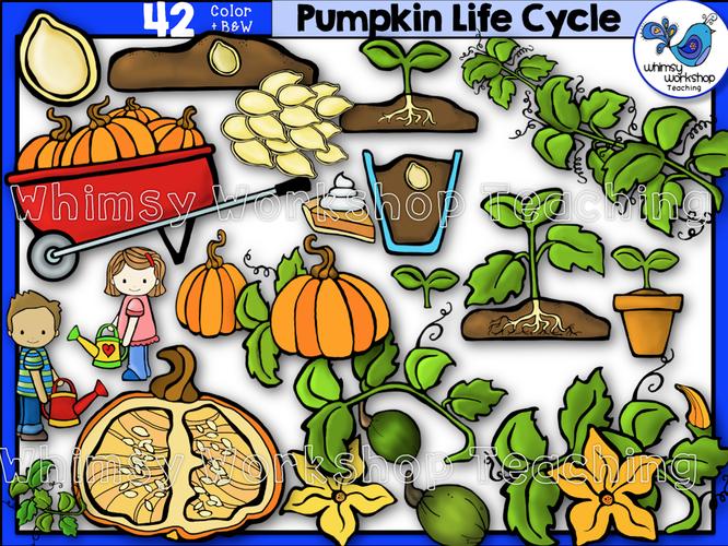 Life Cycle - Pumpkin