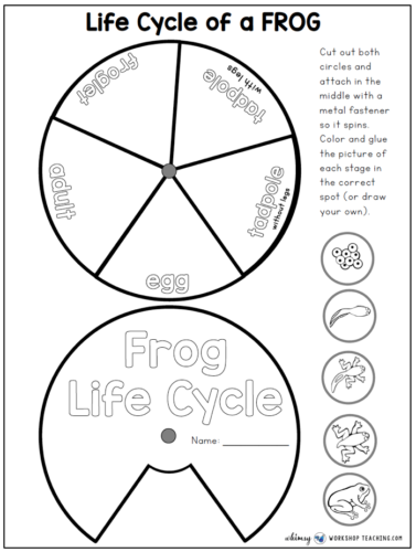 Frog life cycle spinner free download