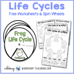 Life Cycles free activities